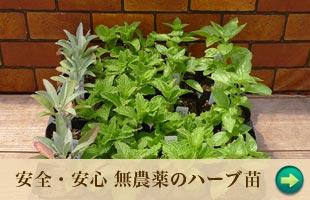 安全・安心無農薬のハーブ苗